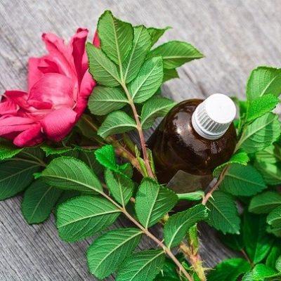 【2021】癒しの青葉の香り♡グリーン系香水おすすめ10選! アイキャッチ画像