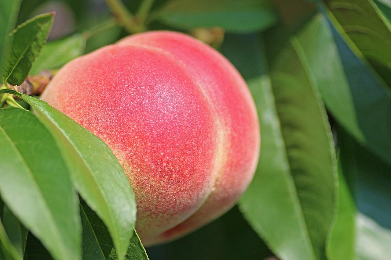 ピーチの香りの香水おすすめ15選!甘くて可愛い桃の香り♡ アイキャッチ画像