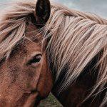 上品な馬革(ホースレザー)の魅力を徹底調査!人気の商品は?