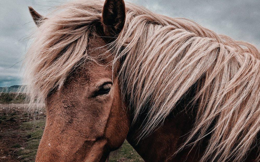 上品な馬革(ホースレザー)の魅力を徹底調査!人気の商品は? アイキャッチ画像